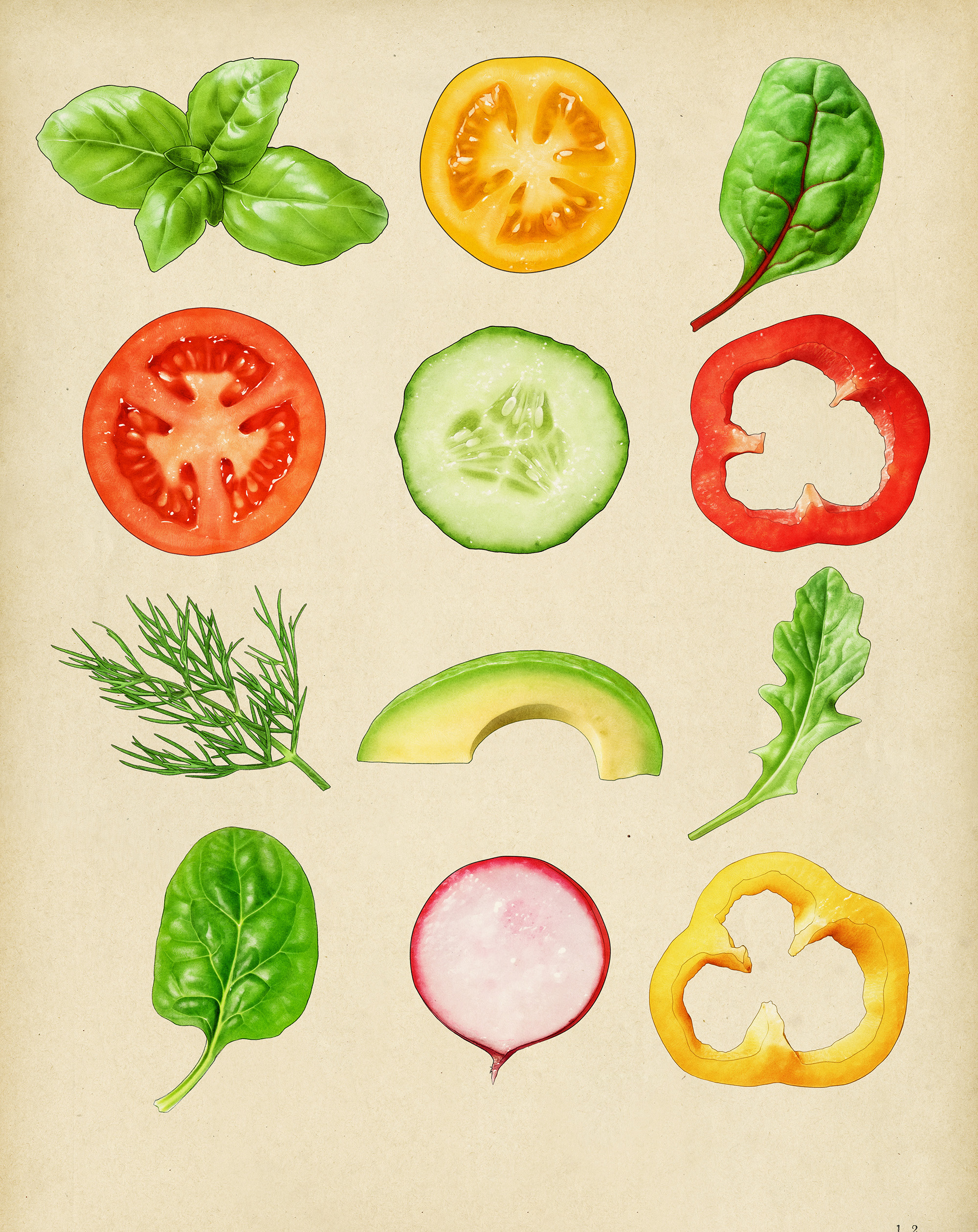 vegetable illustrations for sandwich packaging Parsons spreads with chard dill spinach tomato radish pepper avocado cucumber basil