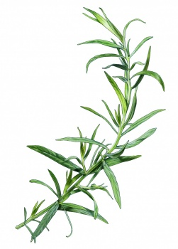 Dragon tarragon spice for a pacage with ham