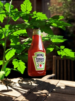 A bottle of Heinz ketchup in a tomato plant leaf ketchup tomat löv blad växt